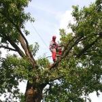 Кронирование деревьев 🏆 в Москве заказать на дом недорого - Фото 3