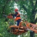 Спиливание деревьев 🏆 в Москве заказать на дом недорого - Фото 3