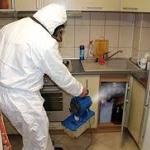 Уничтожение блох 🏆 в Москве заказать на дом недорого - Фото 7