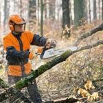 Спиливание деревьев 🏆 в Москве заказать на дом недорого - Фото 1