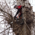 Кронирование деревьев 🏆 в Москве заказать на дом недорого - Фото 6