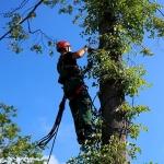 Кронирование деревьев 🏆 в Москве заказать на дом недорого - Фото 4
