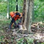 Спиливание деревьев 🏆 в Москве заказать на дом недорого - Фото 4