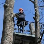 Кронирование деревьев 🏆 в Москве заказать на дом недорого - Фото 2