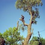 Кронирование деревьев 🏆 в Москве заказать на дом недорого - Фото 7