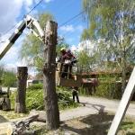 Спиливание деревьев 🏆 в Москве заказать на дом недорого - Фото 6