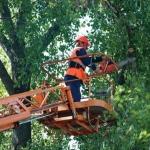 Спиливание деревьев 🏆 в Москве заказать на дом недорого - Фото 7